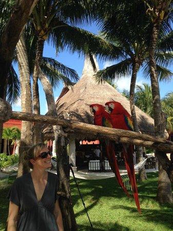 Zoetry Paraiso de la Bonita: Birds at lunch. Pool bar in background.