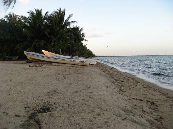 Tipple Tree Beya: Beach side of the property
