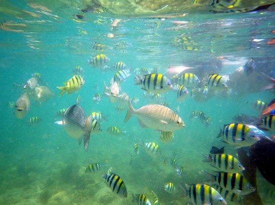 Fairmont Orchid, Hawaii: Fische