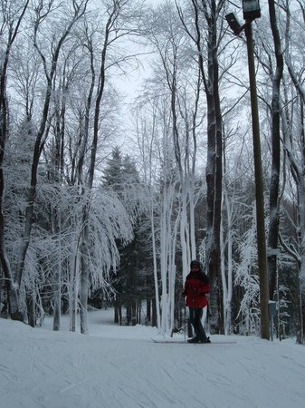Inn at Holiday Valley : Trees covered in snow off of trail