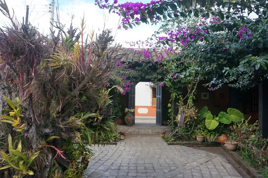 Guayaba Inn: Courtyard