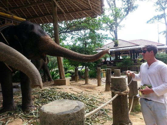 Kok Chang Safari Elephant Trekking: feeding the elephants