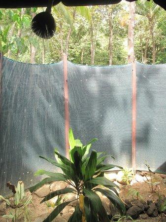 La Leona Eco Lodge: My wonderful outside coconut head shower!
