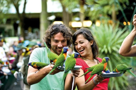 Currumbin, Australia: Lorikeet feeding is a no-charge activity here at the park