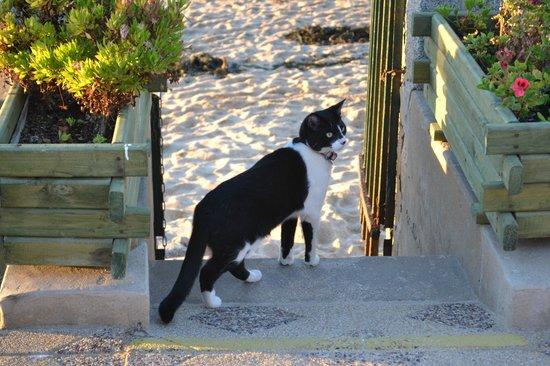 Residencial Vera: Gato Santiago