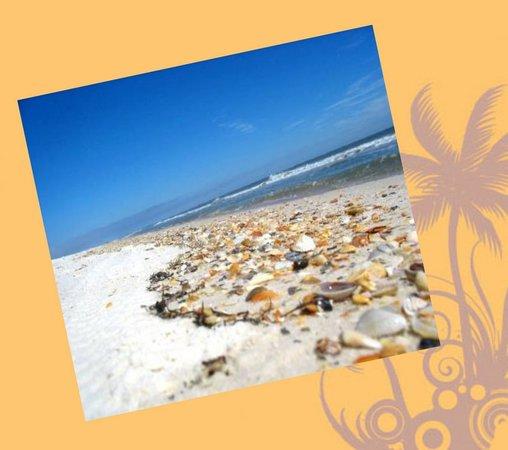 Island Life Charters: Shell Key...