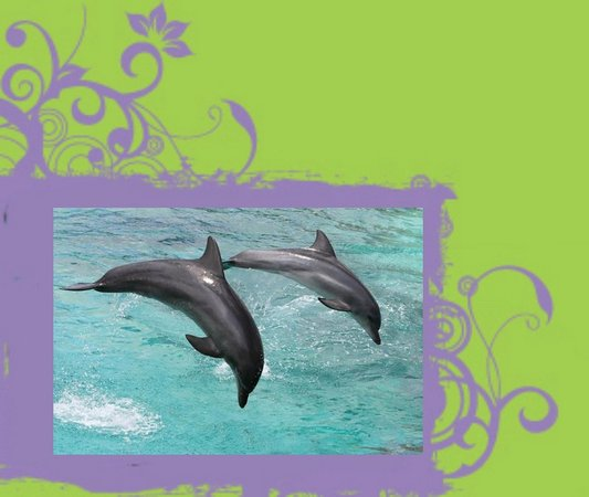 Island Life Charters: Dolphins playing in the wake of our boat in Johns Pass