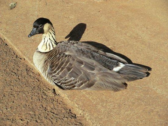 Kilauea Point National Wildlife Refuge: bird on premises