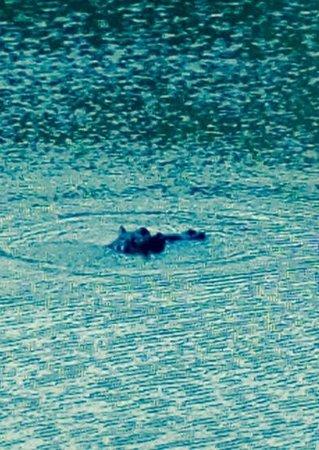 Shamwari Game Reserve Lodges: Hippo