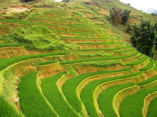 Trails of Mountain Travel : Terraced rice field in Sapa