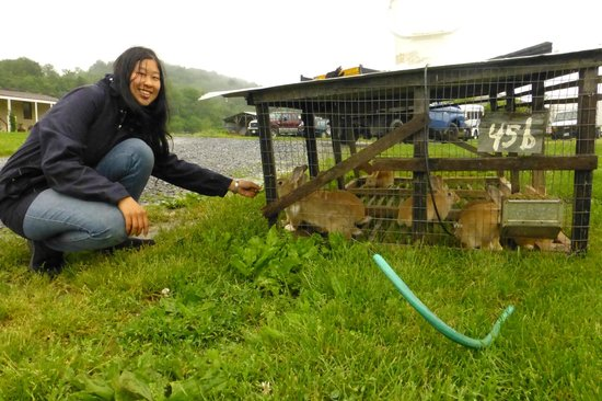 Polyface Farms: Movable rabbit cages