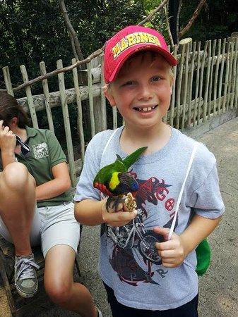 Cincinnati Zoo & Botanical Garden: Feeding the Lorikeets
