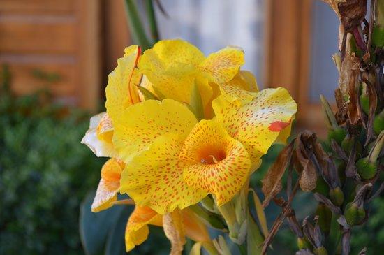Casa Grande Bambito Highlands Resort : Flores