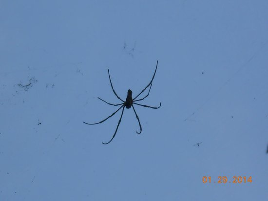 Vana Varin Resort: My 8 legged friend