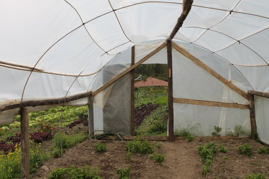 El Albergue Ollantaytambo: one of the green houses from the farm