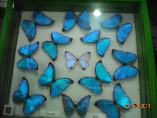 Gumbalimba Park: Preserved butterflies in the Insectarium
