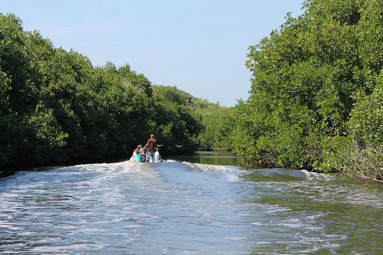 Los Angeles Locos: Mangrove tour
