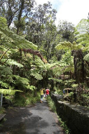 Nahuku - Thurston Lava Tube: まずはジャングルを抜ける