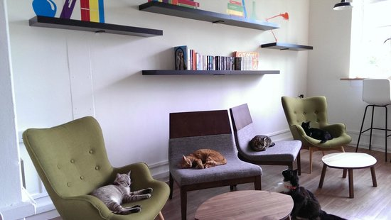 Cat Cafe Neko no Niwa