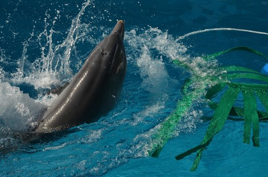 Clearwater Marine Aquarium: Hope playing