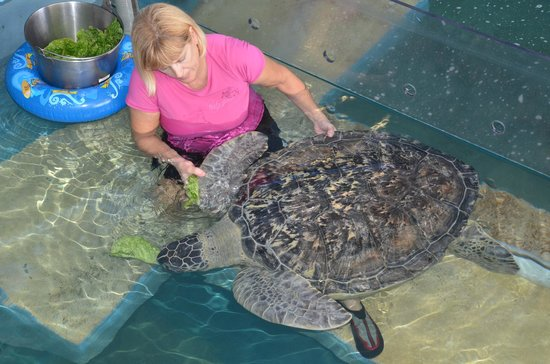 Clearwater Marine Aquarium: Huge sea turtle