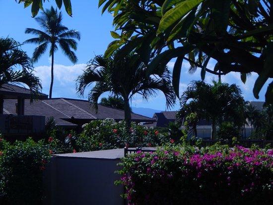 Maui Eldorado : Beautiul grounds