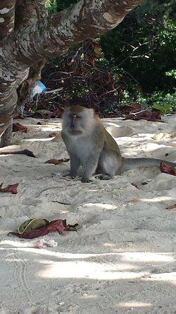 Berjaya Tioman Resort - Malaysia: Beach pal