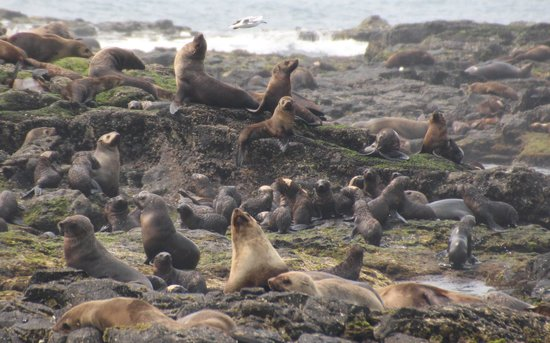 Wildlife Coast Cruises: babies and their mothers