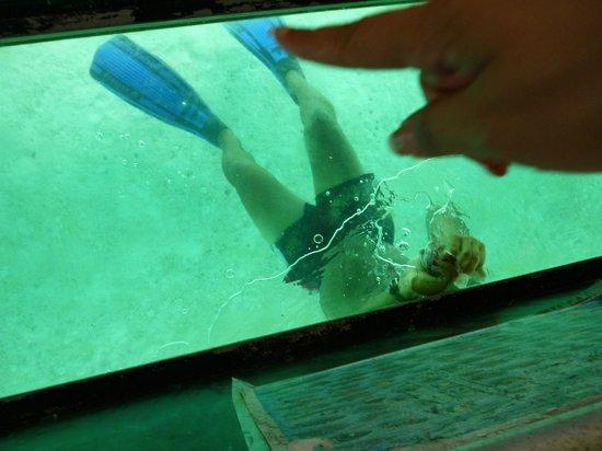 Koka Lagoon Cruises: glass bottom view