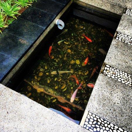 The Khayangan Villas : Our villa had fish!