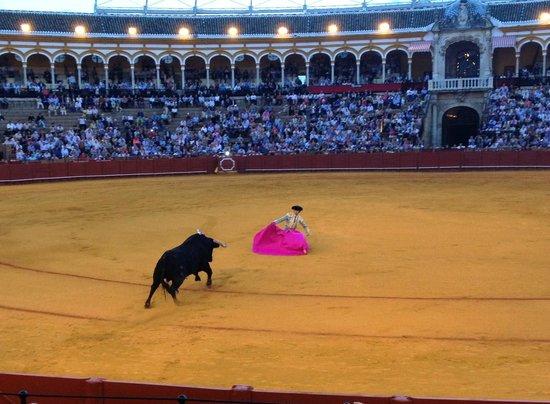 Plaza de Toros de la Maestranza: seville