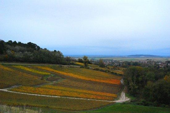 Domaine des Grattieres: Vue sur vignes