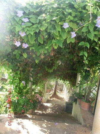 Chambres d´hotes La Romana: L'escalier du jardin
