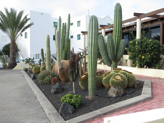 Hotel Coronas Playa : A small selection of the cacti and succulents in the grounds.
