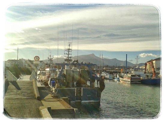 Belle vue sur le port de pêche de saint jean de luz du restaurant la grillerie de sardines