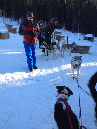 Sirius Sled Dogs & Aurora Tours: Getting ready to hitch up to the sled