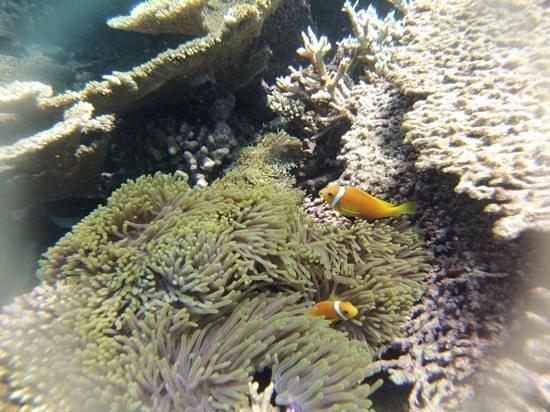 VOI Dhiggiri Resort : Nemo!