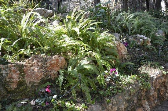 Hotel Mitzpe Hayamim : Gardens..
