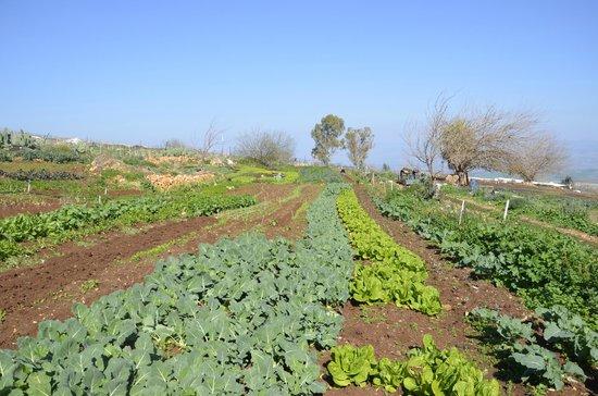 Hotel Mitzpe Hayamim: Organic garden