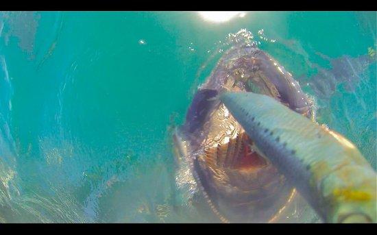 Swim with the Tuna: GoPro view of Tuna grabbing the bait