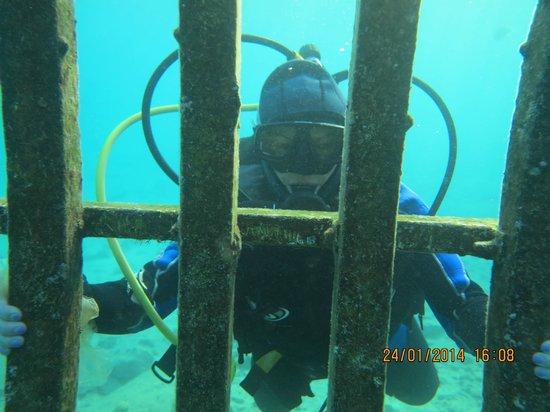 Manta Isrotel Diving Centre: Beyond the bars