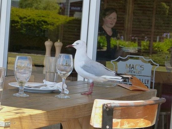 The Fat Duck : Gulls at the ready to raid tables!