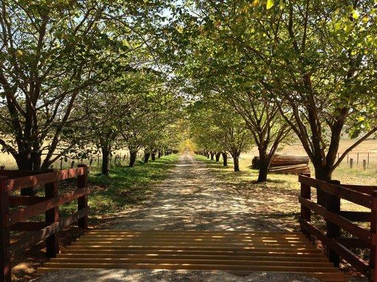 Stockman's Ridge Wines: Entrance in Autumn