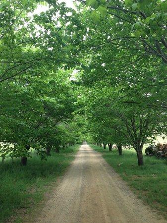 Stockman's Ridge Wines: Entrance in Summer