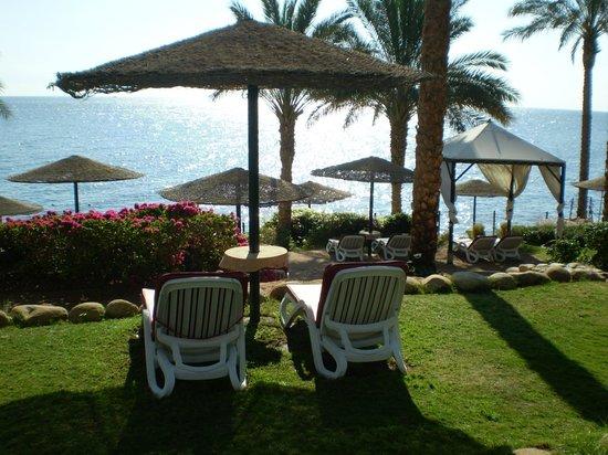 Grand Rotana Resort & Spa : Отличные места для загара, места достаточно всегда, вид супер, очень чисто