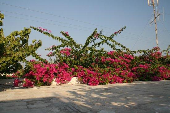 Dionysia Studios: il giardino