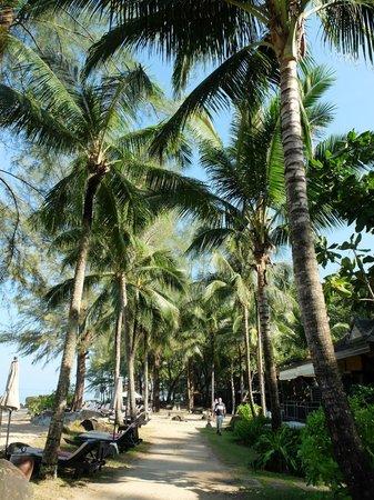 Moracea by Khao Lak Resort : Near the beach