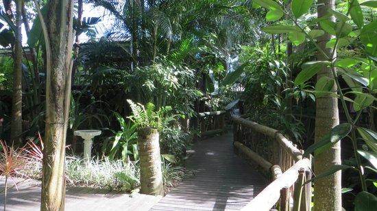 Umlilo Lodge B&B : One of many lovely ramp tropical walks within lodge