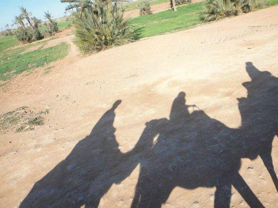 Riad Cherrata : On our camels!