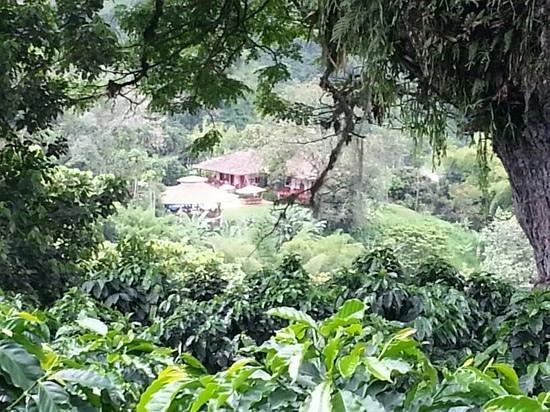 Hacienda Venecia Coffee Farm: Casa principal desde lejos.
